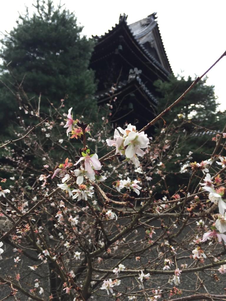 知恩院 御身拭式【着物レンタルは京都四条烏丸の古都へ】9