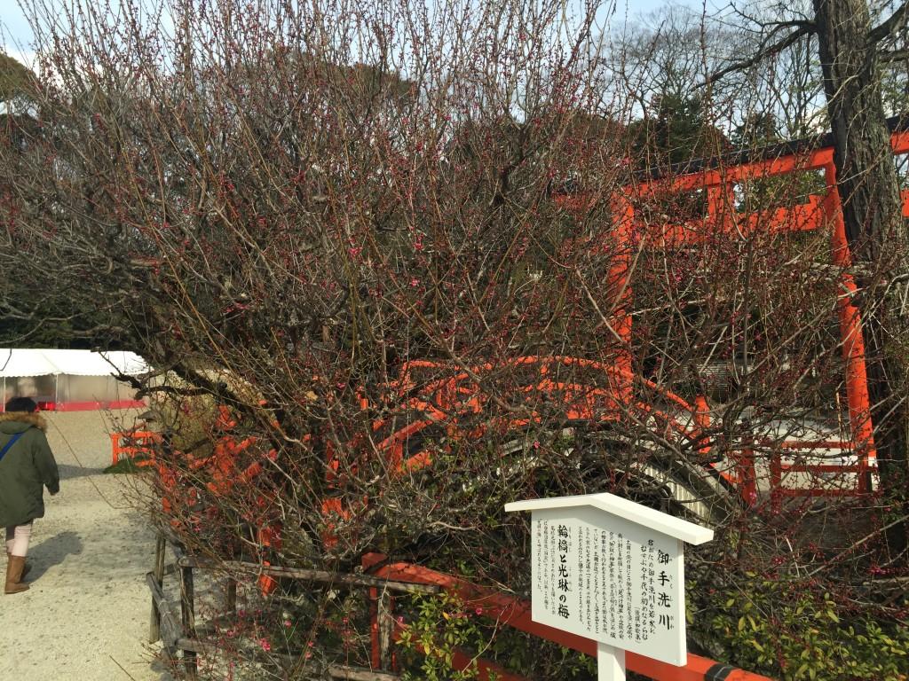 京都の梅スポット 着物レンタルで下鴨神社へ6