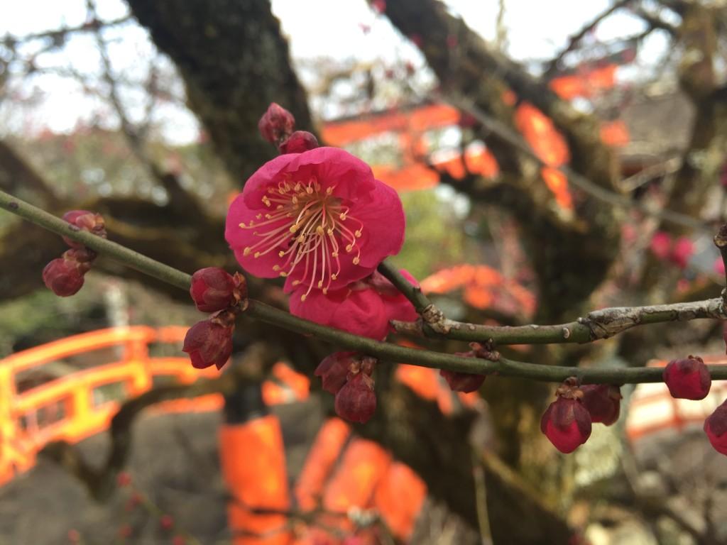 京都の梅スポット 着物レンタルで下鴨神社へ7