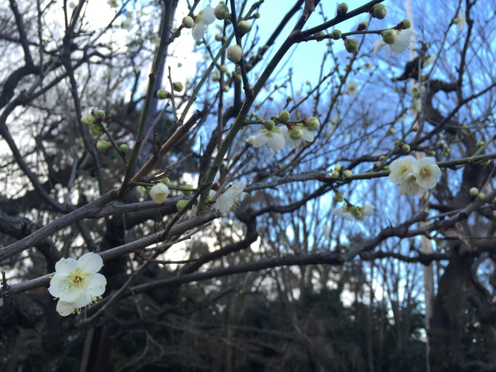 京都の梅スポット「元離宮二条城」四条烏丸からバスで10分5