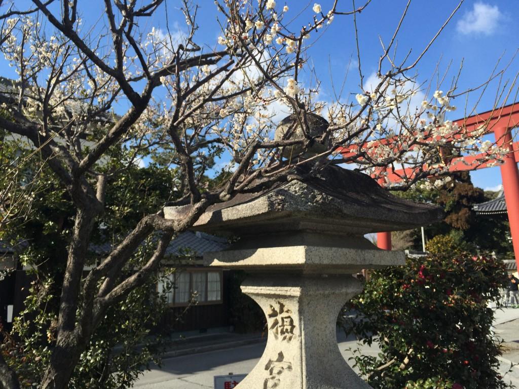 京都の梅スポット「梅宮大社」四条烏丸からバスで30分2