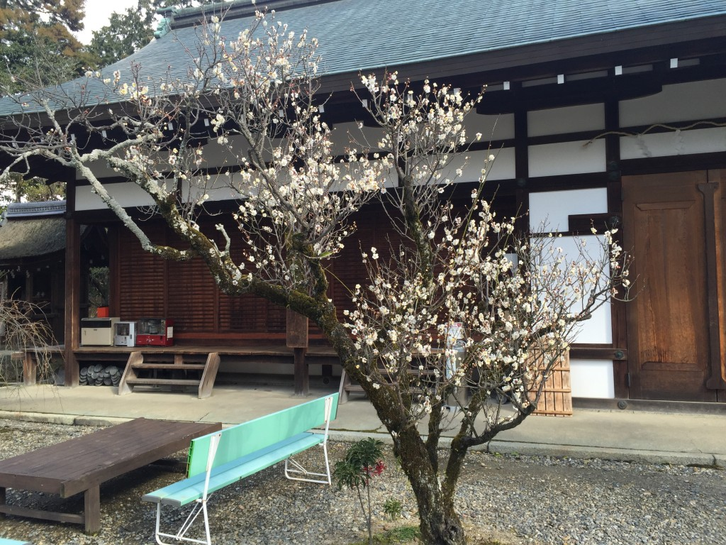 京都の梅スポット「梅宮大社」四条烏丸からバスで30分7