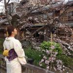各地で桜の開花宣言!京都レンタルきもの古都2016年3月31日31
