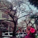着物レンタルで桜もう少しで満開の京都を散策♪1