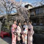 京都祇園白川の桜と着物レンタル2016年3月26日18