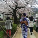 着物レンタルで桜満開の京都を散策!2016年4月2日3