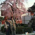 京都御所 春季一般公開を着物レンタルで満喫!2016年4月6日25