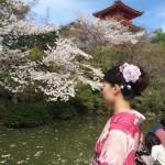 明後日から始業式!その前に着物レンタルで京都の桜を♪2016年4月5日25