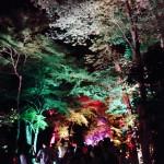 浴衣レンタルで嵐山・鈴虫寺を満喫♪2016年8月23日10