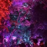 やはり今日も浴衣レンタルで「下鴨神社 糺ノ森の光の祭」2016年8月25日17