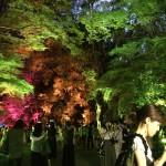 やはり今日も浴衣レンタルで「下鴨神社 糺ノ森の光の祭」2016年8月25日18