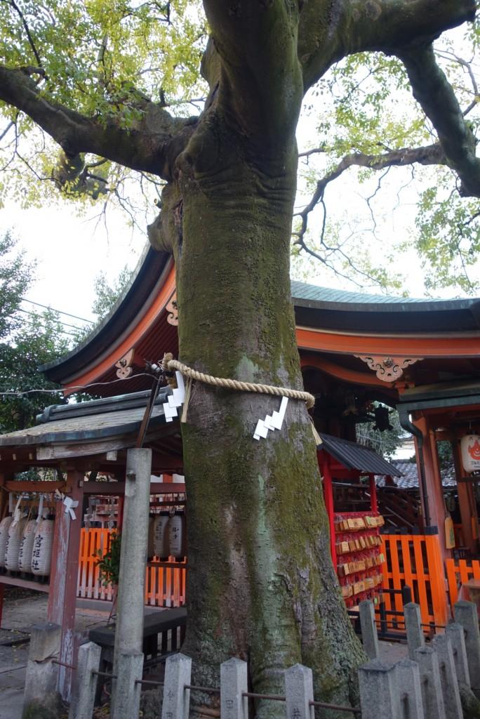 縁結び!坂本龍馬とお龍と武信稲荷神社4