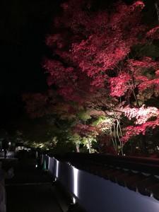 永観堂3【四条烏丸 着物レンタル 京都レンタルきもの古都】