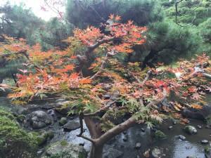 四条烏丸の京都レンタルきもの古都で平安神宮神苑へ!13