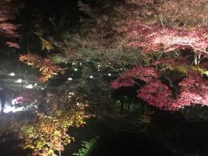 京都の金戒光明寺を四条烏丸の古都で着物レンタルして夜間拝観!7