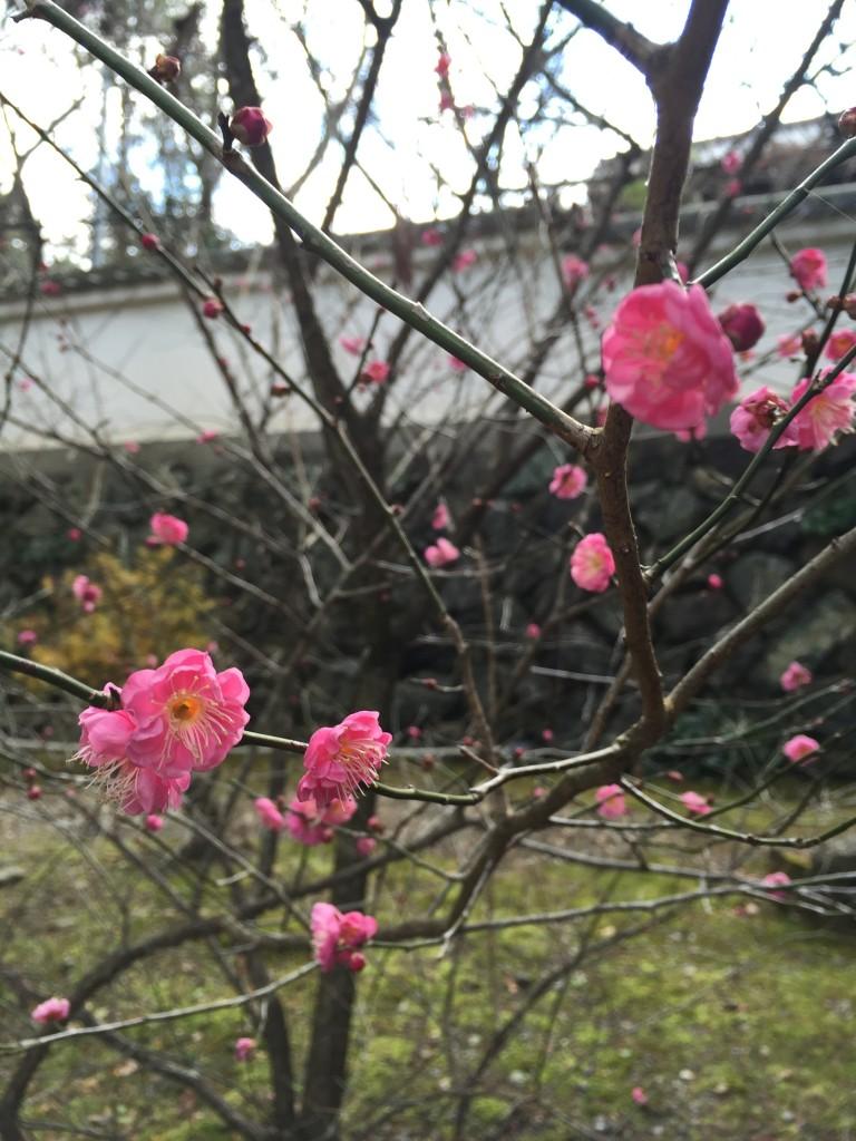 東福寺三門 特別公開【京都の着物レンタルは四条烏丸の古都へ】10