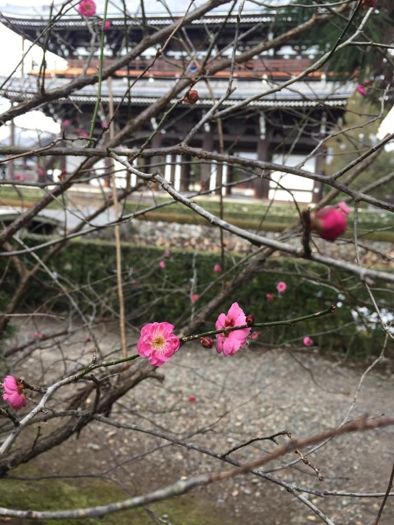 東福寺三門 特別公開【京都の着物レンタルは四条烏丸の古都へ】11