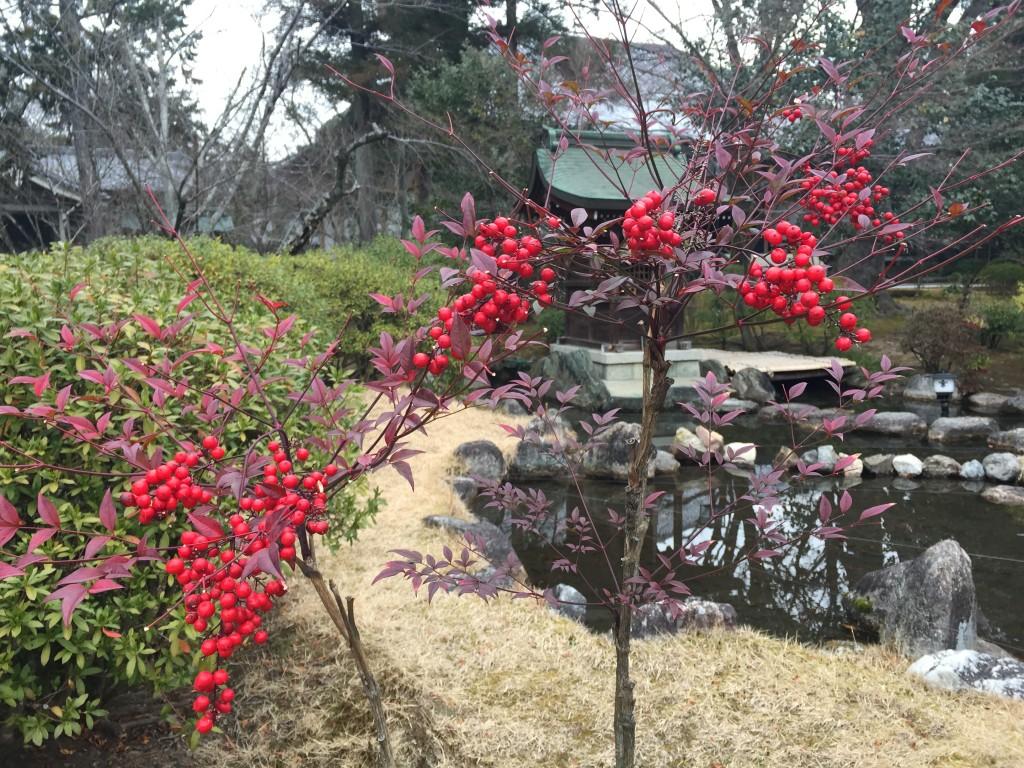 京都太秦広隆寺でほんの少し桜が咲いていました!6