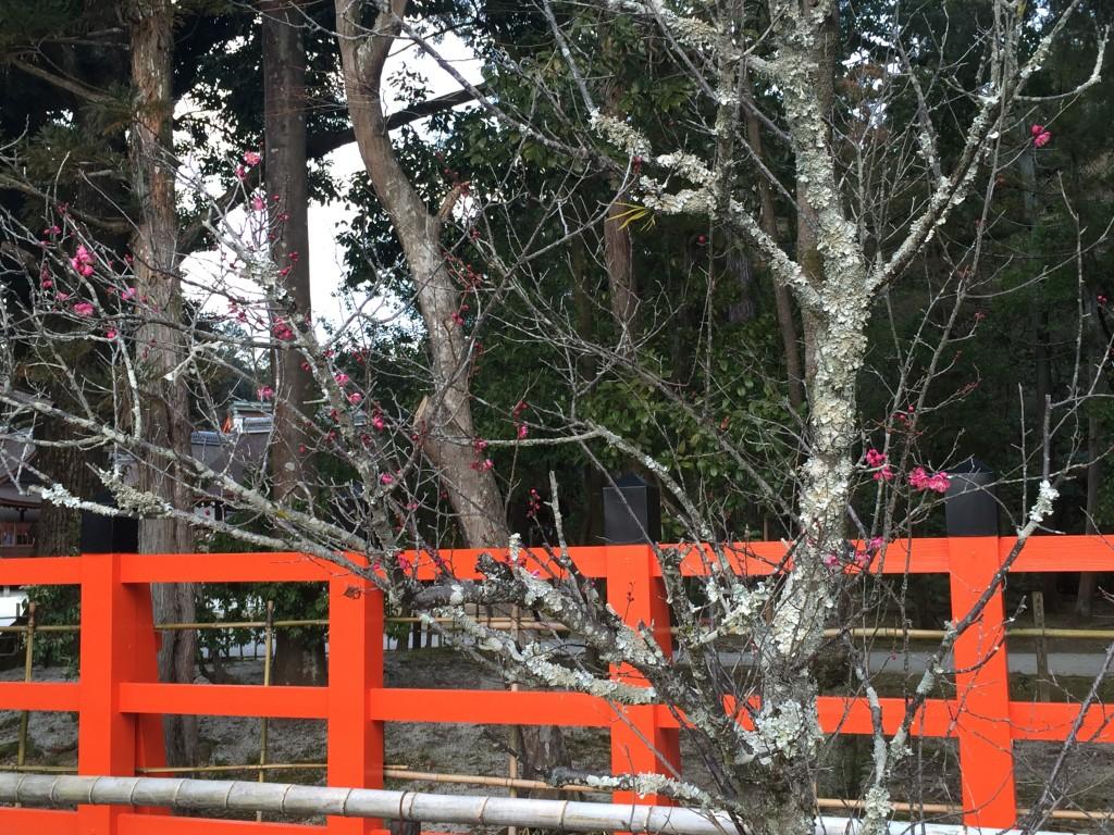 京都の梅スポット 着物レンタルで上鴨神社へ2