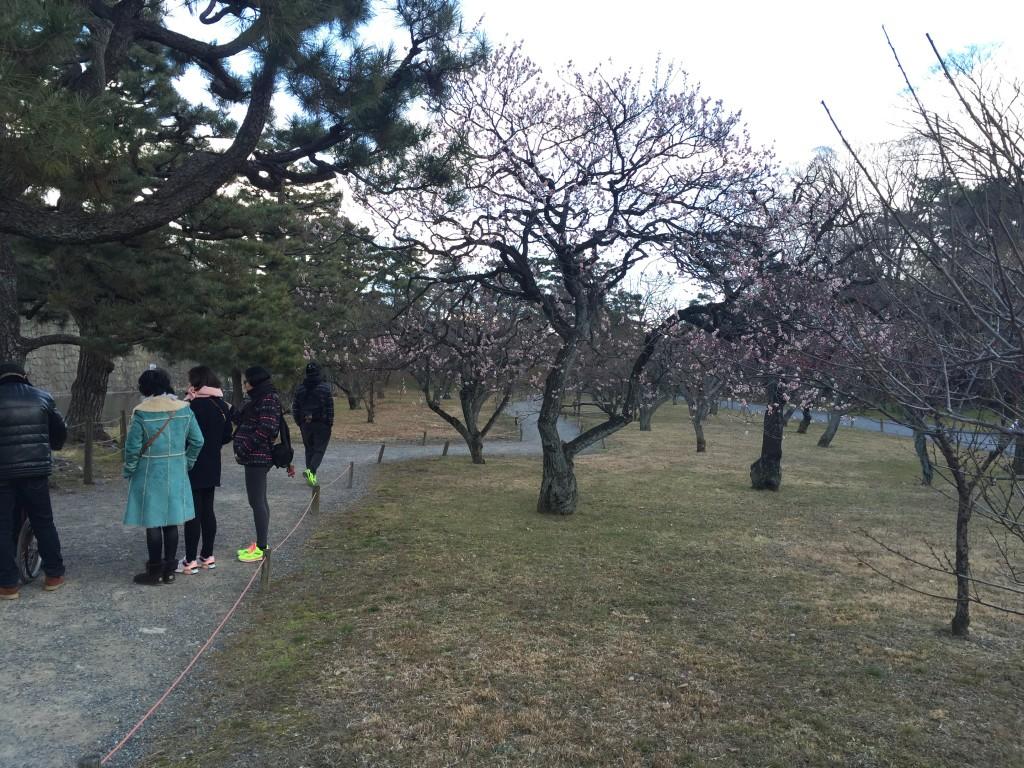 京都の梅スポット「元離宮二条城」四条烏丸からバスで10分3
