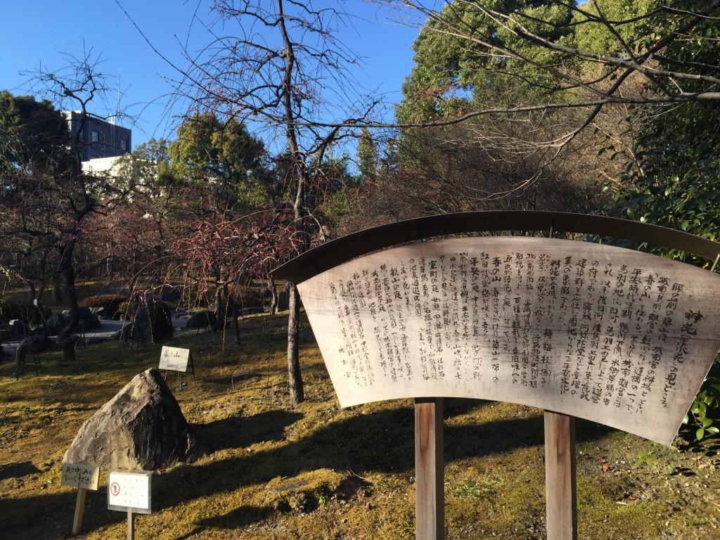 京都の梅スポット「城南宮」枝垂梅と椿まつり5