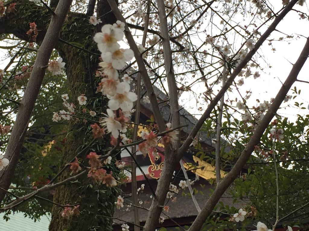 京都八坂神社末社「美御前社」でお肌ツルツル!4
