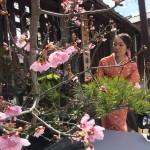 春休み!着物レンタルで京都を満喫♪2016年3月15日29
