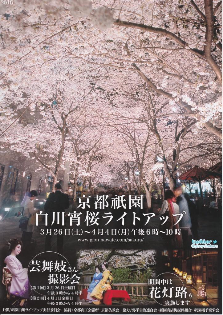京都祇園白川宵桜ライトアップ2016 1