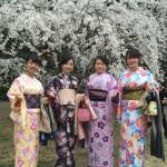 着物レンタルで桜もう少しで満開の京都を散策♪10