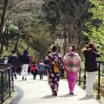 春の京都!みんなで着物レンタル!2016年3月24日19