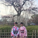 京都の桜満開までもうすぐ!着物レンタル古都7