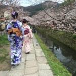 着物レンタルで桜満開の京都を散策!2016年4月2日4