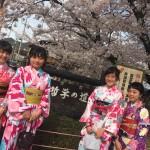 明後日から始業式!その前に着物レンタルで京都の桜を♪2016年4月5日14
