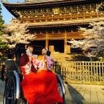 明後日から始業式!その前に着物レンタルで京都の桜を♪2016年4月5日20
