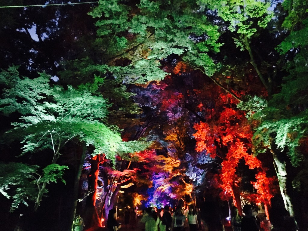 浴衣レンタルで嵐山・鈴虫寺を満喫♪2016年8月23日11