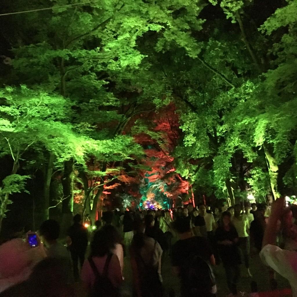 今日も大人気の「下鴨神社 糺ノ森の光の祭」へ!2016年8月24日20