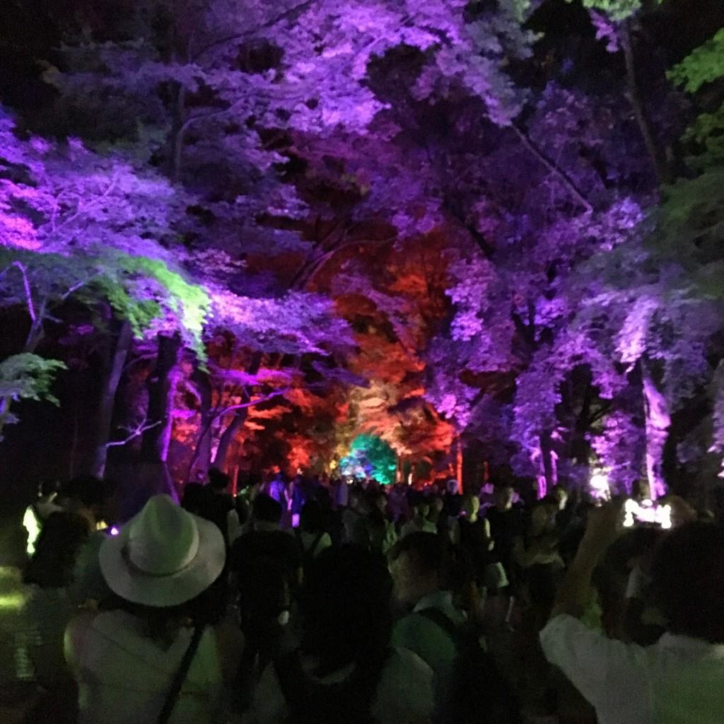 今日も大人気の「下鴨神社 糺ノ森の光の祭」へ!2016年8月24日21