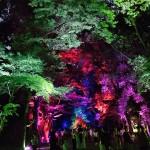 浴衣レンタルで嵐山・鈴虫寺を満喫♪2016年8月23日12