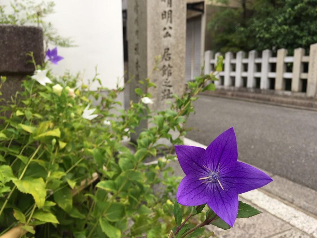 陰陽師 安倍晴明「晴明神社」9
