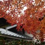 昼も夜も京都の紅葉真っ盛り!2016年11月19日28