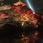 昼も夜も京都の紅葉真っ盛り!2016年11月19日25