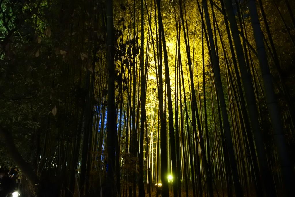 2016 嵐山 花灯路!大盛況!15