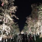 「京の七夕2017」~鴨川・堀川~2017年8月6日20