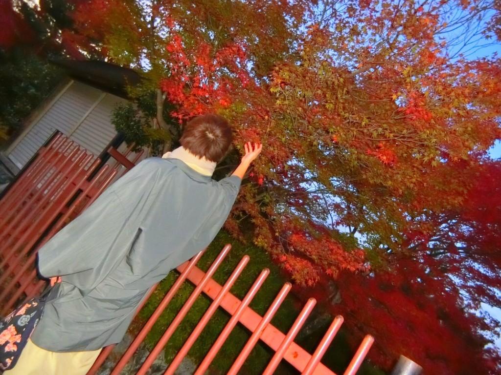 東福寺の紅葉も見頃です❣2017年11月20日15
