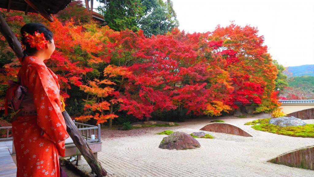 大原 勝林院・宝泉院 秋の夜灯り京都2017へ❣2017年11月22日7