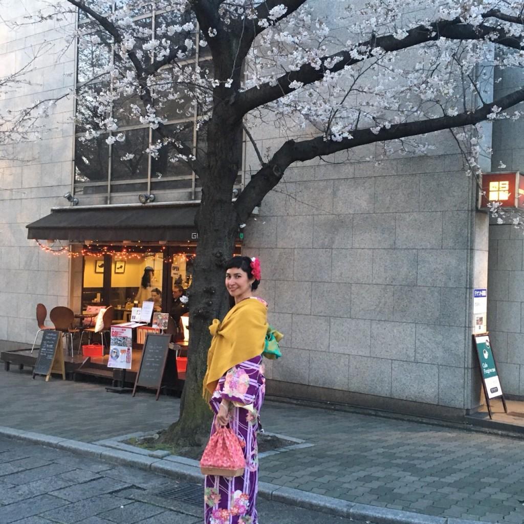 二条城桜まつりライトアップ❣和装の方は入城無料2018年3月23日6