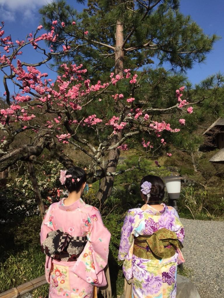 二条城桜まつりライトアップ❣和装の方は入城無料2018年3月23日7