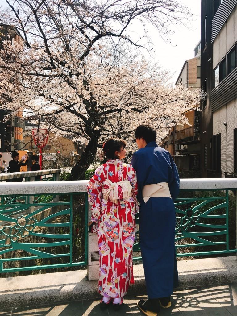各名所、桜そろそろ満開です❣2018年3月26日6