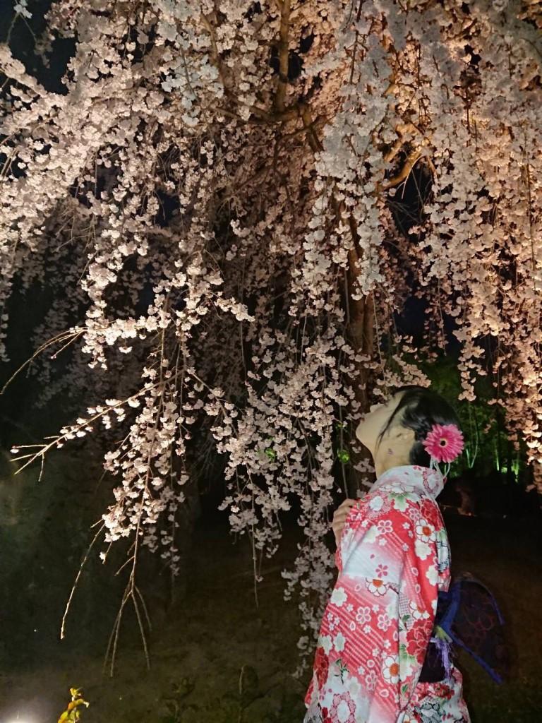 各名所、桜そろそろ満開です❣2018年3月26日17