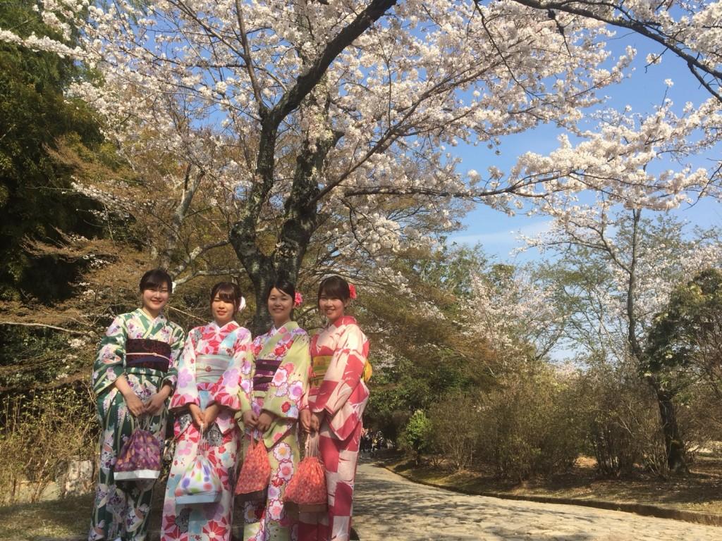円山公園は桜満開です♡2018年3月27日23